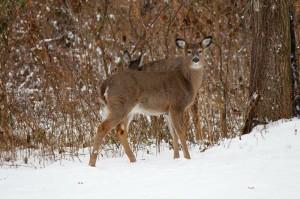 Zwierzęta online Prowadzimy całodobową transmisję z kamer skierowanych na polanę za magazynami chętnie odwiedzaną przez leśne zwierzęta. Kliknij na zdjęcie aby przejść do transmisji.